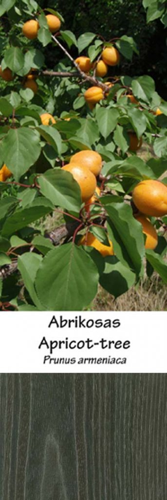 Abrikosas | Adomo medis