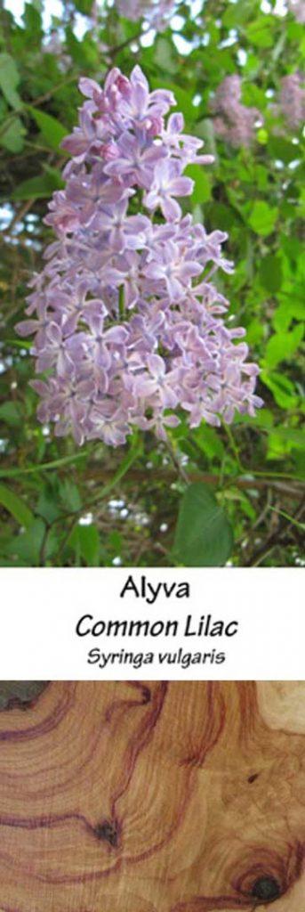 Alyva | Adomo medis