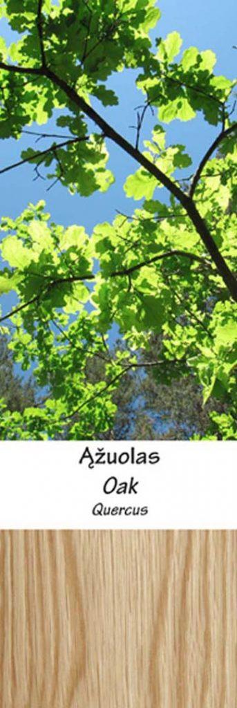 Ąžuolas | Adomo medis