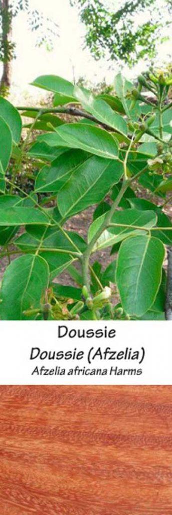 Doussie | Adomo medis