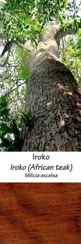 Iroko | Adomo medis