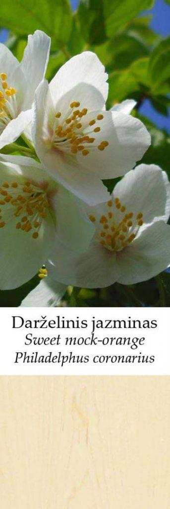 Jazminas | Adomo medis