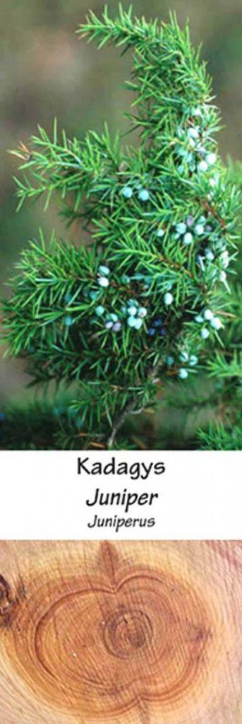 Kadagys | Adomo medis