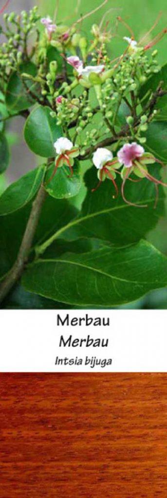 Merbau | Adomo medis