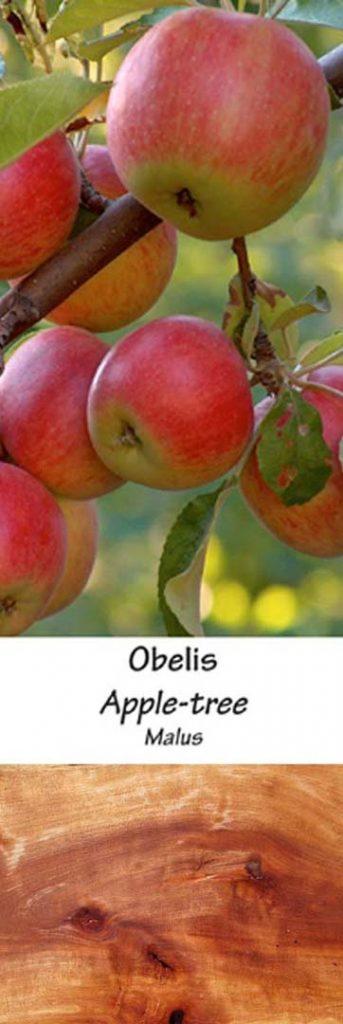 Obelis | Adomo medis