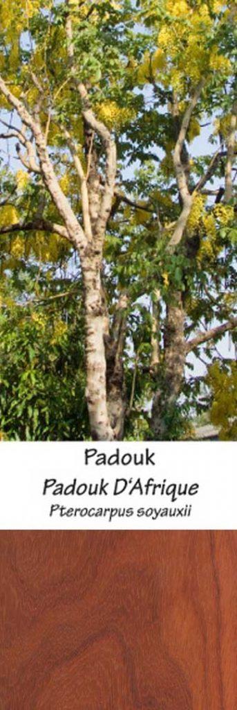 Padouk Padouk | Adomo medis