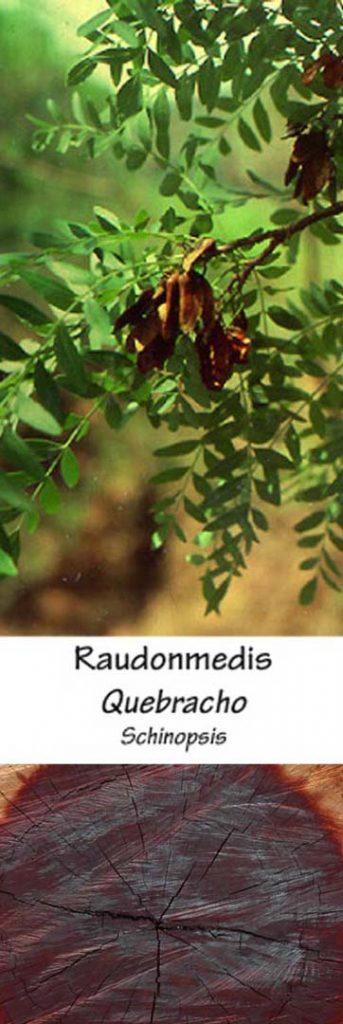 Raudonmedis | Adomo medis