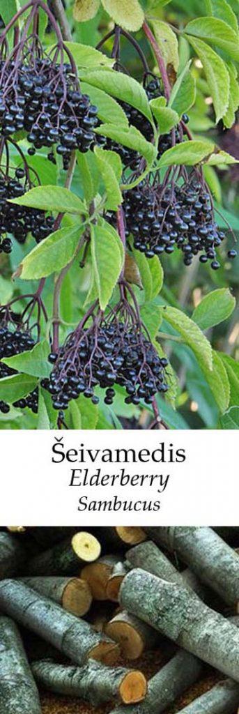 Šeivamedis | Adomo medis