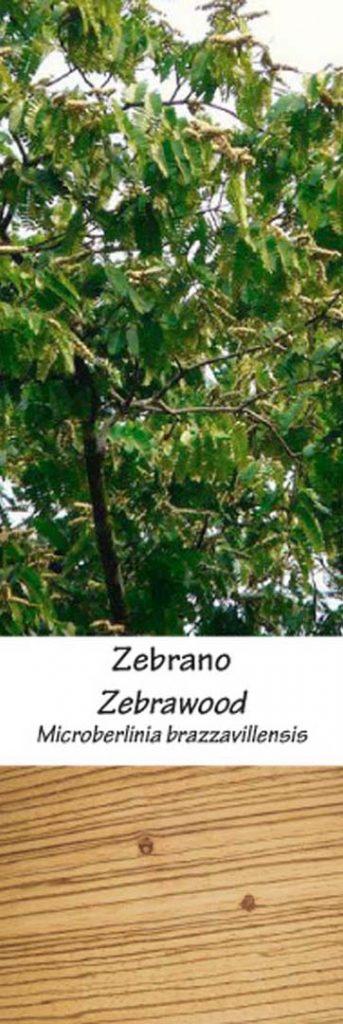 Zebrano | Adomo medis